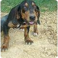 Adopt A Pet :: Sammie - cedar grove, IN