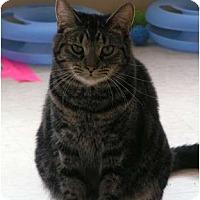 Adopt A Pet :: Lewis - Monroe, GA