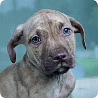 Adopt A Pet :: James - South Jersey, NJ