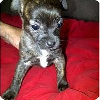Adopt A Pet :: Beany - Arlington, TX