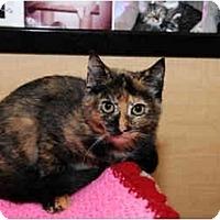 Adopt A Pet :: Mystery - Farmingdale, NY