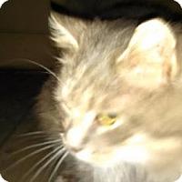 Adopt A Pet :: CP - DE - Loveless - Blairstown, NJ