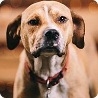Adopt A Pet :: Austin - Portland, OR