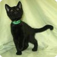 Adopt A Pet :: Riker - Powell, OH