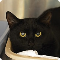 Adopt A Pet :: Olive - Worcester, MA
