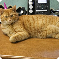 Adopt A Pet :: Oliver - Medina, OH
