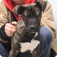 Adopt A Pet :: Stevie - Elyria, OH