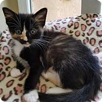 Adopt A Pet :: Caddie - Waxhaw, NC