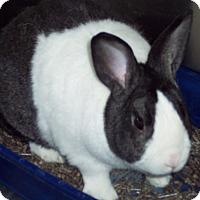 Adopt A Pet :: Elsa - Olivet, MI
