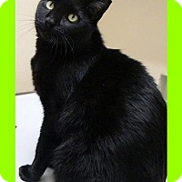 Adopt A Pet :: Chris - Courtesy Posting - Euless, TX