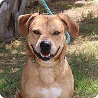 Adopt A Pet :: Todd - Lacey, WA