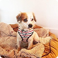 Adopt A Pet :: Cubby - Los Angeles, CA