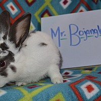 American for adoption in Erie, Pennsylvania - Mr. Bojangles