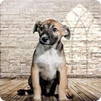Adopt A Pet :: Oakley - McKinney, TX