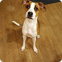 Adopt A Pet :: May - Grand Rapids, MI