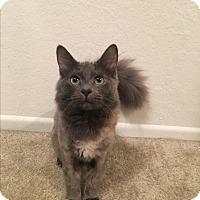 Adopt A Pet :: Harley - Mission Viejo, CA
