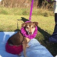 Adopt A Pet :: Kate - Salisbury, NC