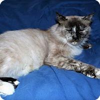 Adopt A Pet :: Nani - Mackinaw, IL