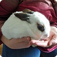 Adopt A Pet :: Ruby - Alexandria, VA