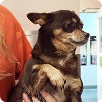 Adopt A Pet :: Granola - Westminster, CA
