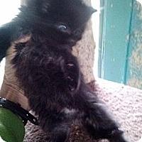 Adopt A Pet :: Watson - Tarboro, NC