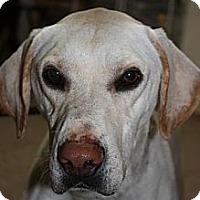 Adopt A Pet :: Boomer - Stilwell, OK