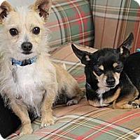 Adopt A Pet :: Dobbie - Homewood, AL