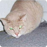 Adopt A Pet :: Budda - Hamburg, NY