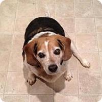 Adopt A Pet :: Bertha - Phoenix, AZ