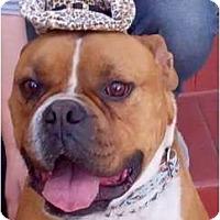 Adopt A Pet :: Chuco - Santa Monica, CA