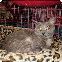 Adopt A Pet :: Cloudy - Chesapeake, VA
