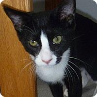 Adopt A Pet :: Starsky - Hamburg, NY