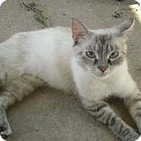Adopt A Pet :: Nebela - Acme, PA