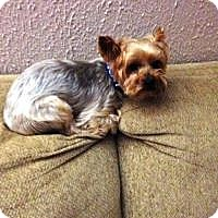 Adopt A Pet :: Hotch - House Springs, MO