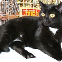 Adopt A Pet :: Midnight - Salisbury, NC