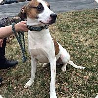 Adopt A Pet :: Zackary - Pompton lakes, NJ
