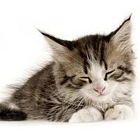 Adopt A Pet :: Douglas - Brockton, MA