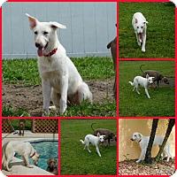 Adopt A Pet :: Emma - Davenport, FL