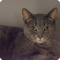 Adopt A Pet :: Josey - New York, NY