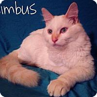 Adopt A Pet :: Nimbus - Mesa, AZ