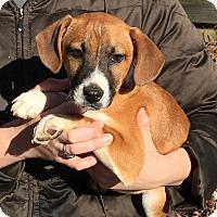Adopt A Pet :: Antonio - Pewaukee, WI