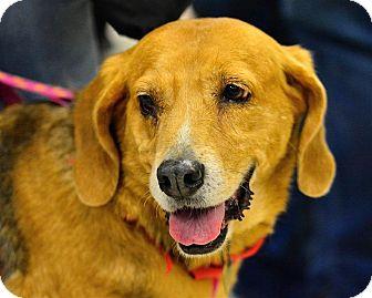 Hound (Unknown Type) Mix Dog for adoption in Fairfax Station, Virginia - Nevaeh