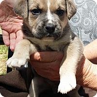 Adopt A Pet :: Stripe - Lawrenceville, GA