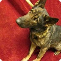 Adopt A Pet :: BELLA - Upper Marlboro, MD