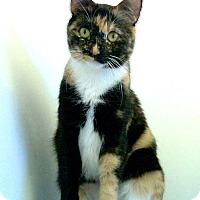 Adopt A Pet :: Ella - Colorado Springs, CO