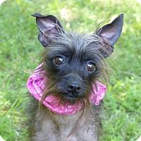 Adopt A Pet :: Trinket - Mocksville, NC