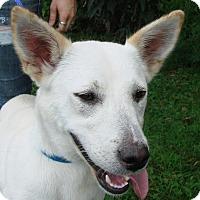 Adopt A Pet :: Sakari - Erwin, TN