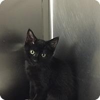 Adopt A Pet :: Liz #9 - Lunenburg, MA