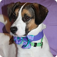 Adopt A Pet :: Ruby Tuesday - Rochester, NY