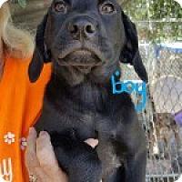 Adopt A Pet :: Bowden - Uxbridge, MA
